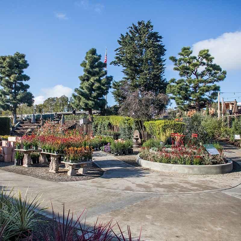 An image of nursery gardens