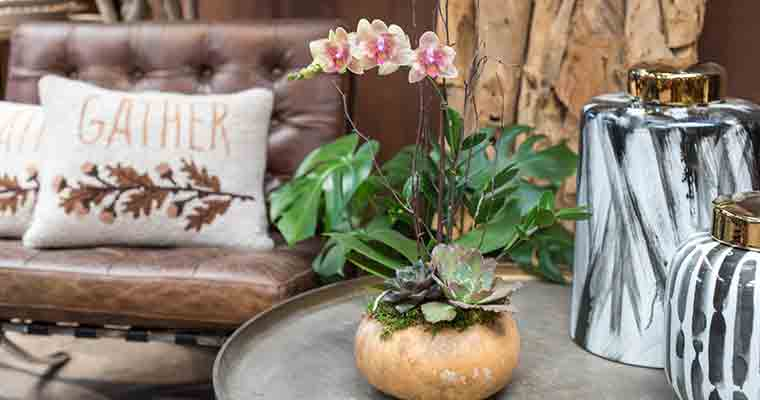 An image of an orchid in a dried gourd with succulents and a zeze plant forming a beautiful arrangement.