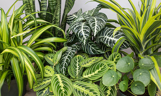 An image of several different indoor plants