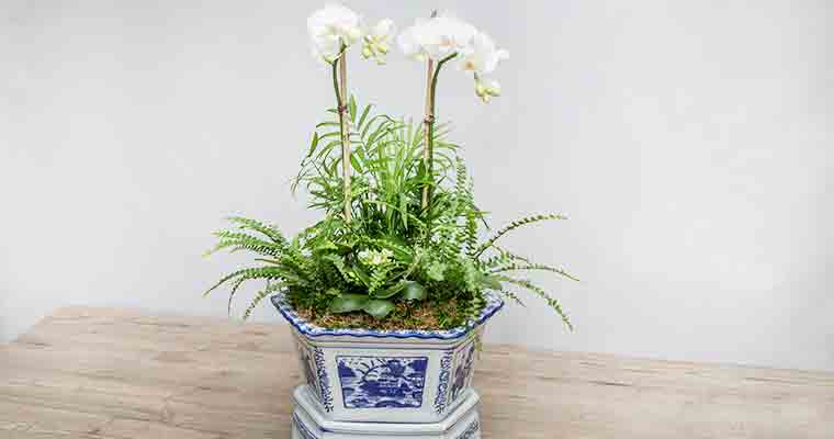 An image of a white orchid planted in a white and blue porcelain pot workshop