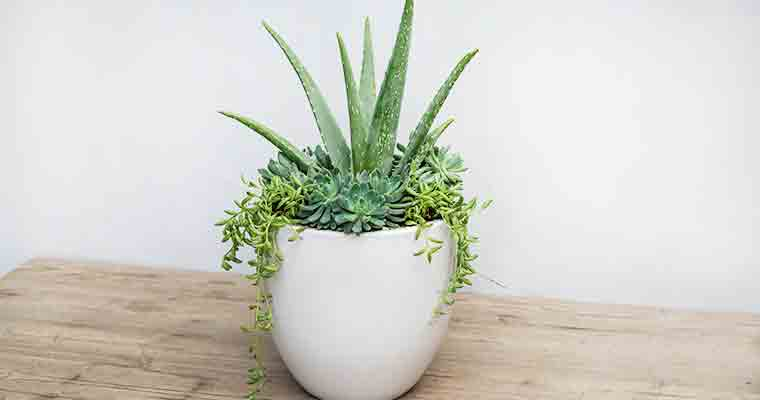 An image of a succulent white pot container for workshop