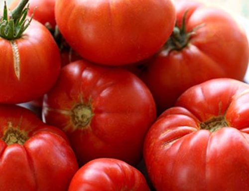 Roger's Recommends Tomatoes for 2020