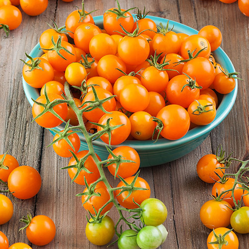 An image of sungold cherry tomatoes