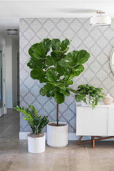 An image of another three types of planted indoor plants in white pots