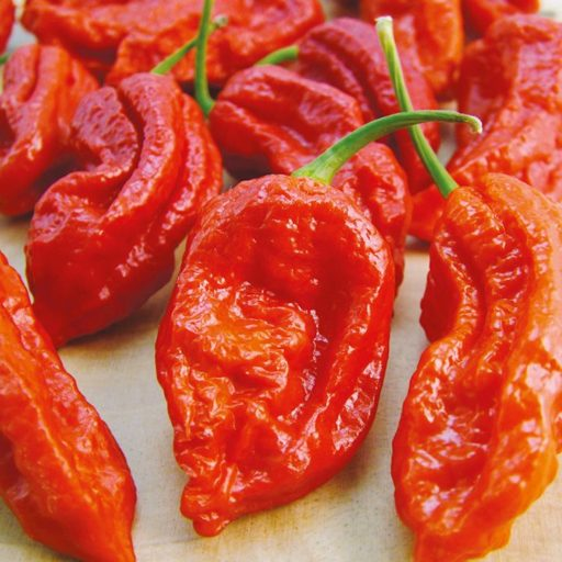"An image of Bhut Jolokia ""Red Ghost"" Peppers"