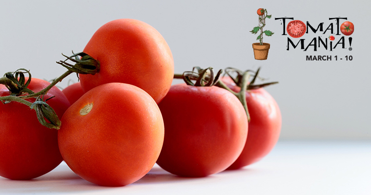 An image of a bright red ripe tomato for Tomato Mania