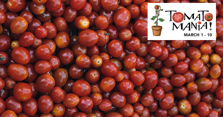An image of just several cherry tomatoes for Tomato Mania