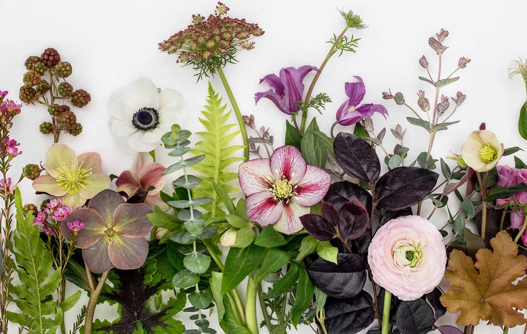 An image of various plant and flowers flat display