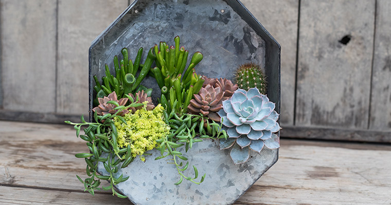 An image of a wall hanging succulent workshop