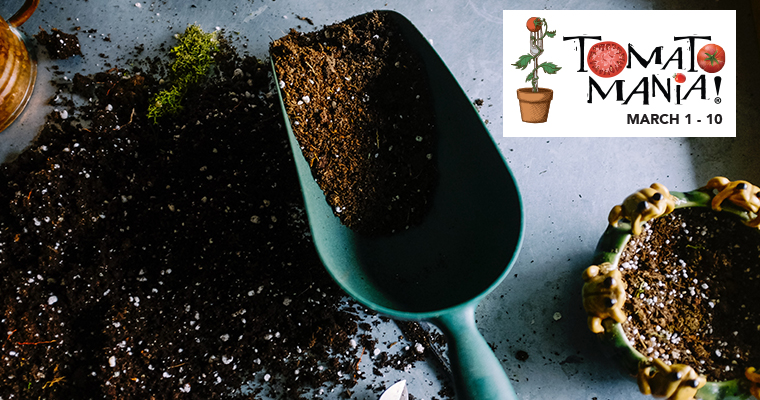 An image of a garden shovel filled with soil for Tomato Mania