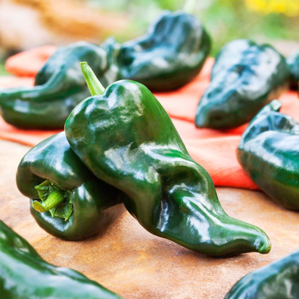 An image of a green Ancho Poblano Pepper