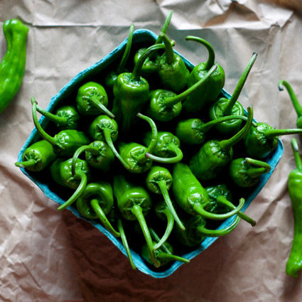 An image of a green Shishito Pepper