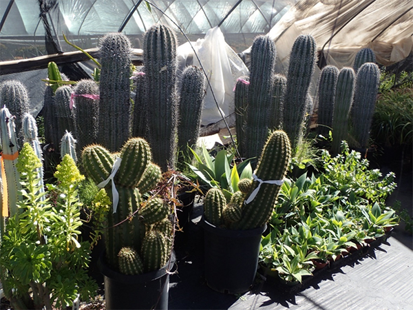 Cacti from Growers in San Diego