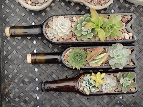 An image of succulents planted in brown glass bottles