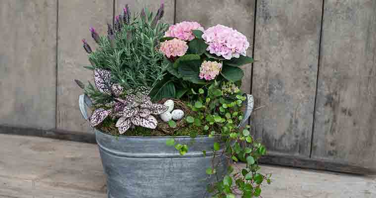 An image of a pink hydrangea with purple flower and plants arrangement