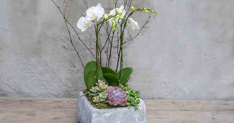 An image of a succulent and white orchid for workshop