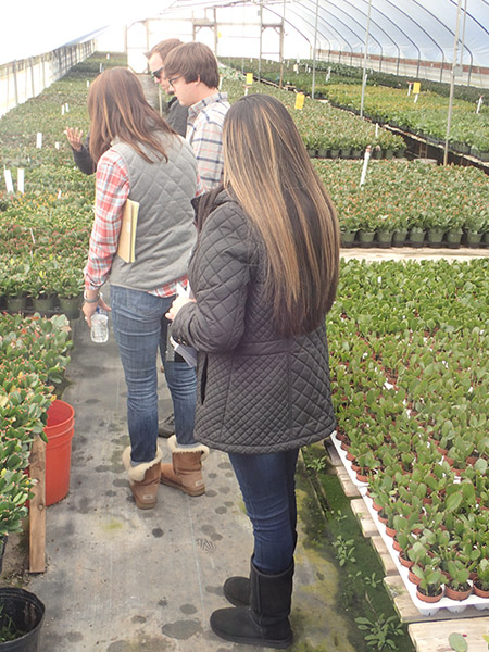 Buyers looking at plants