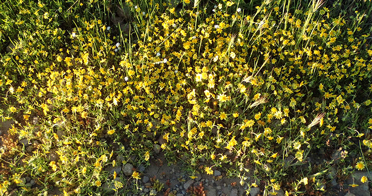 An image of yellow wildflowers