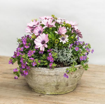 Spring Color in large white low bowl