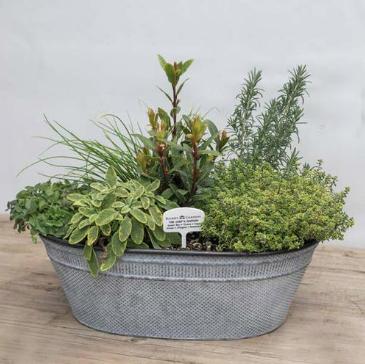 chef's herb garden in metal tin