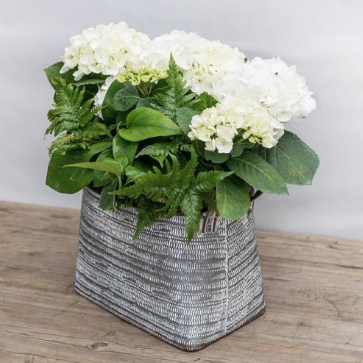 white easter hydrangea bucket