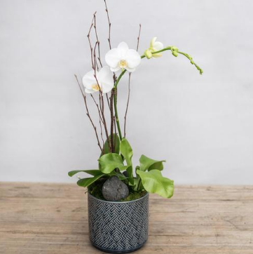 orchid & fern in blue maze pot