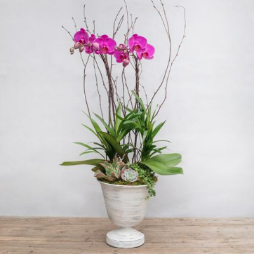 pink orchids in white urn