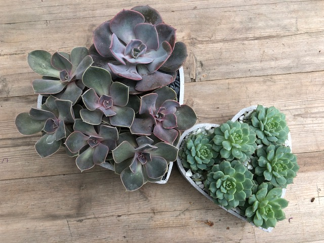 An image of a heart shaped planter box succulents workshop