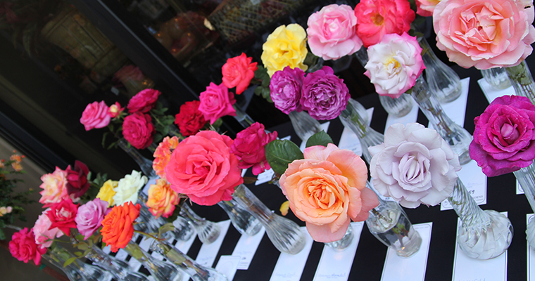 An image of a variety of colored roses for the rose show