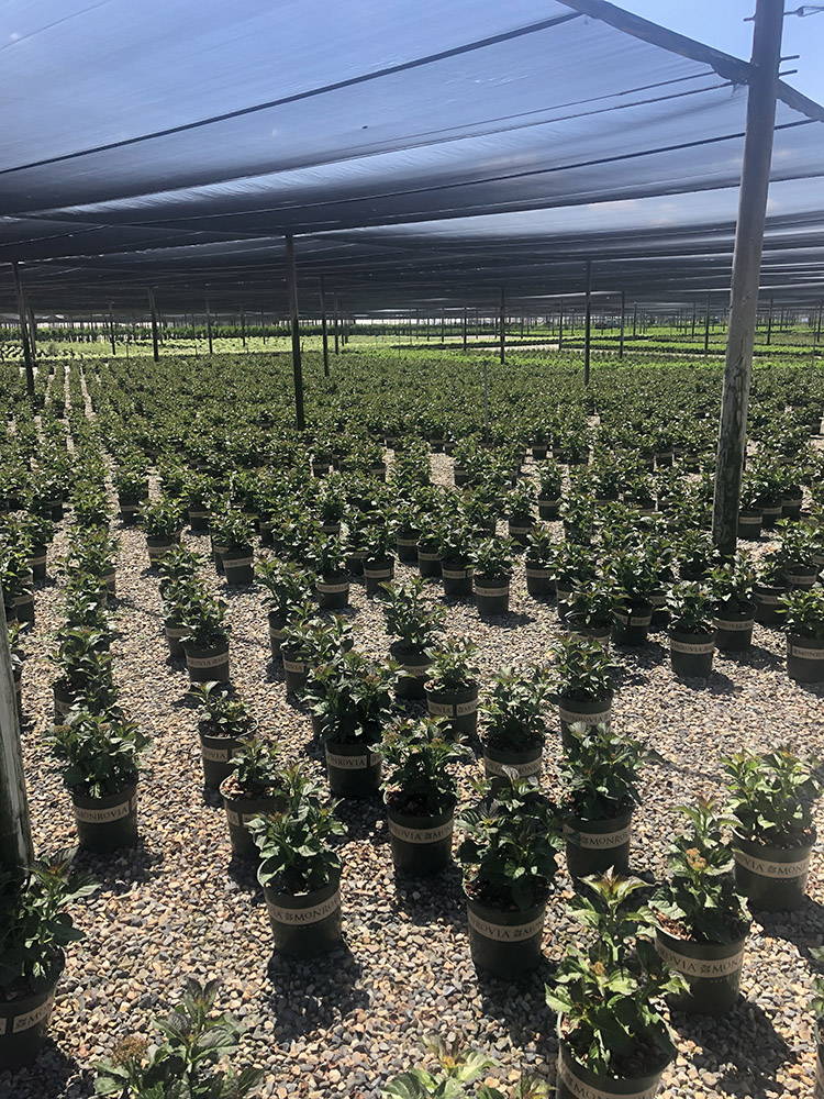 An image of rows of plants from a trip to an industry leading nursery