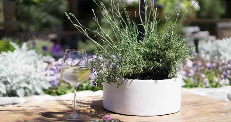 An image of the cocktail Gin and Tonic with herbs for the Garden Series Workshop