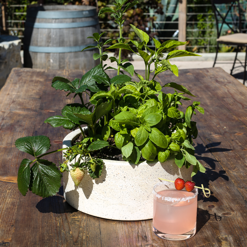 An image of a herb garden with a pink margarita for the Summer in the Garden Series workshop