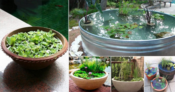 An image of a peaceful diy water garden container
