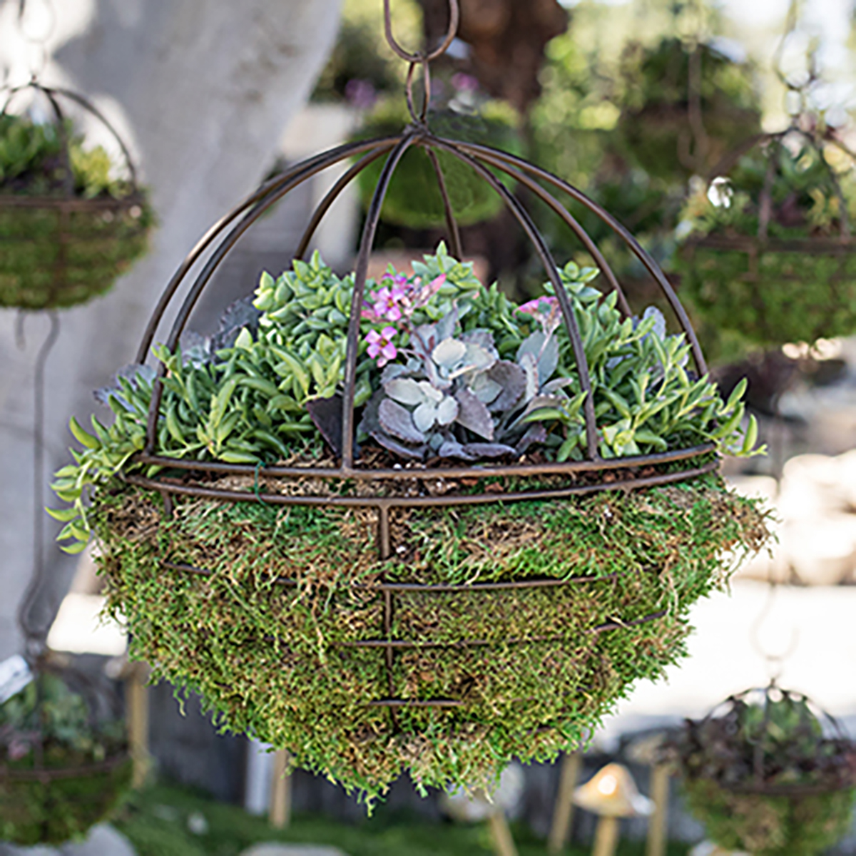 An image of a hanging succulent orb for workshop