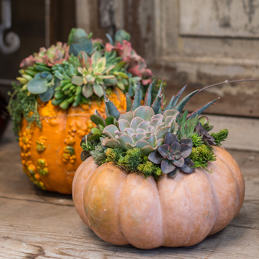 Succulent Pumpkin Workshops