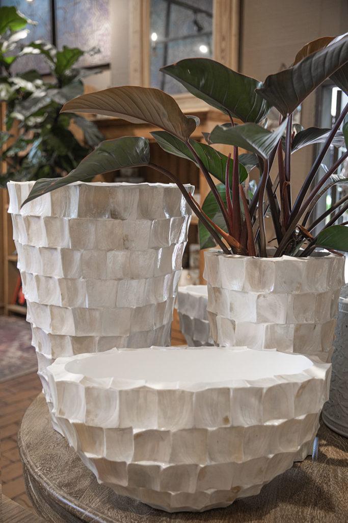 White Shellplanter