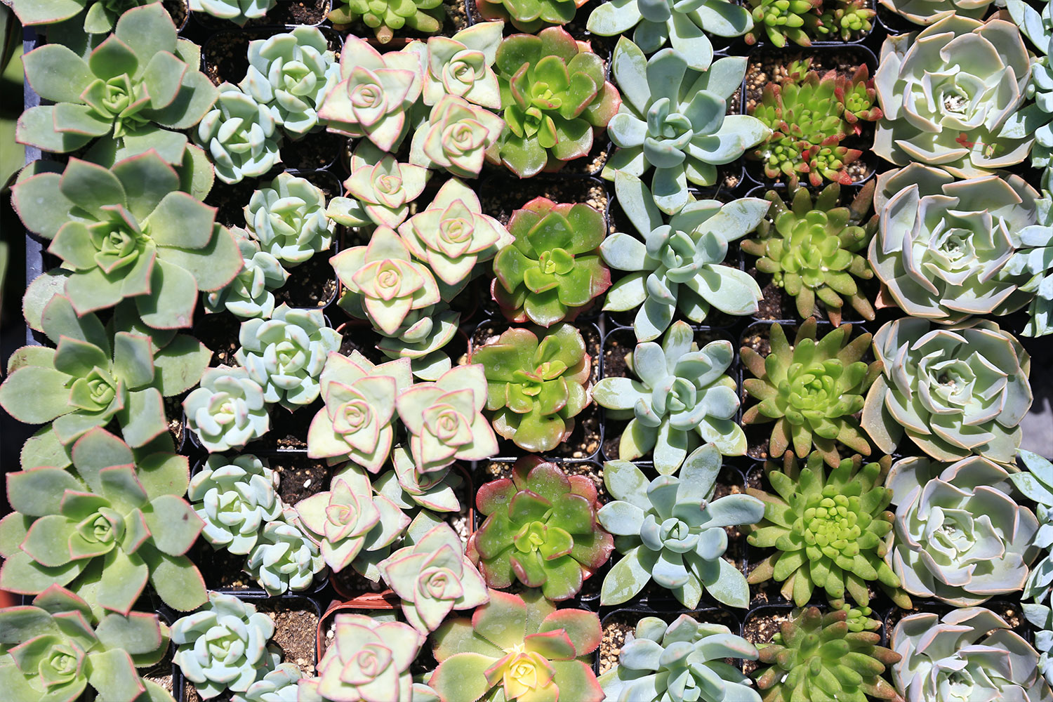 Variety of succulents