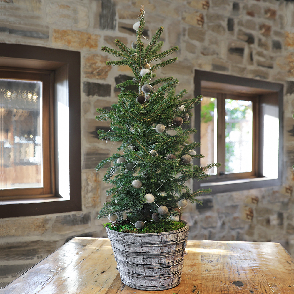 Decorated Natural Living Tree Workshop