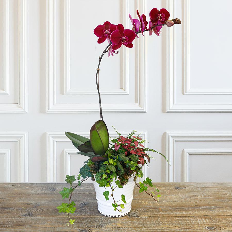 Orchid_Planted-Arrangement_low_res