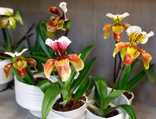 Designing Your Home with Orchids