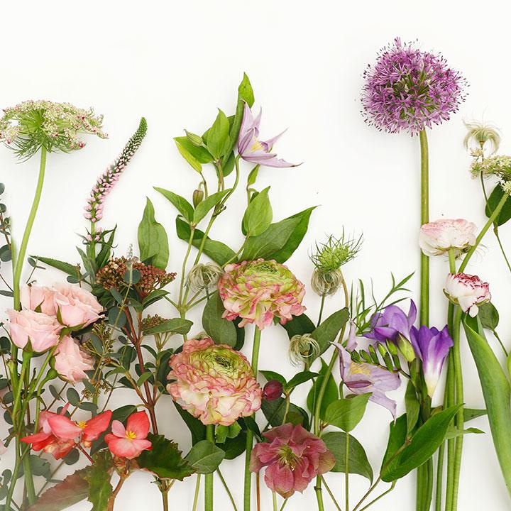 Spring Celebration • Interactive Displays & Demonstrations