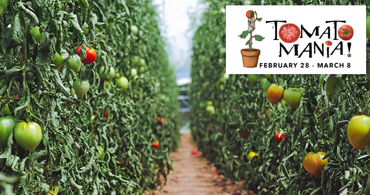 Tomatomania! • Walk & Talk Tomatoes