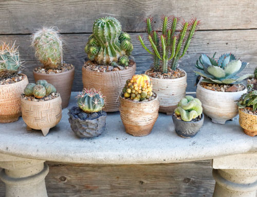 Collectible Succulents
