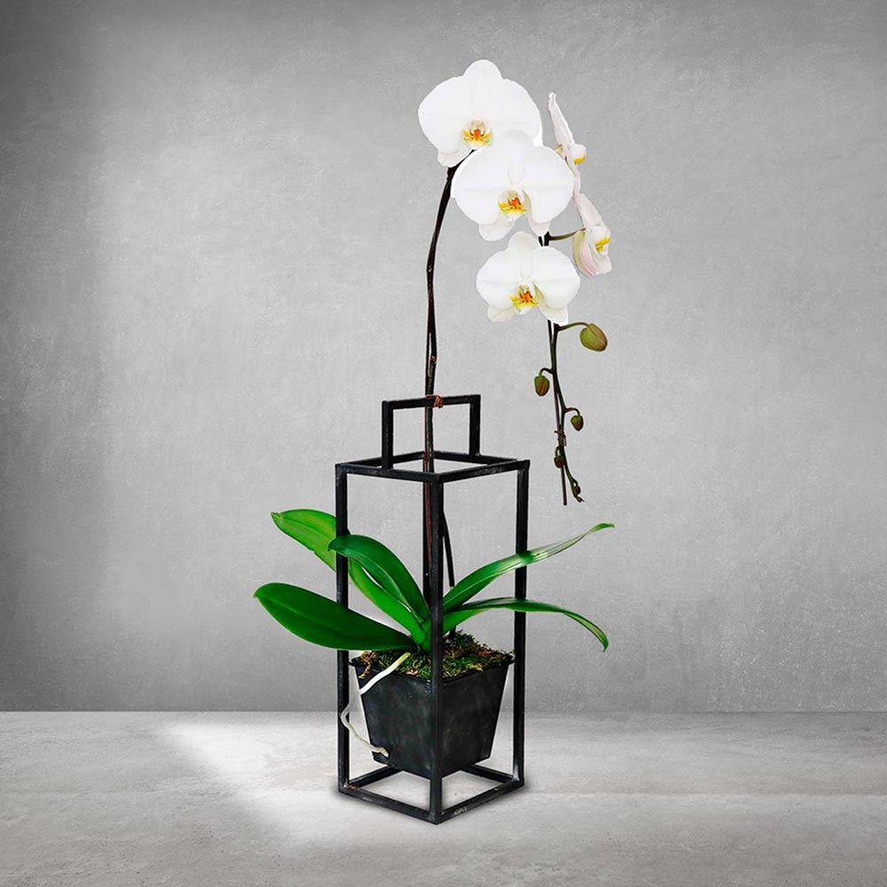 WHITE ORCHID IN BLACK METAL HANGER