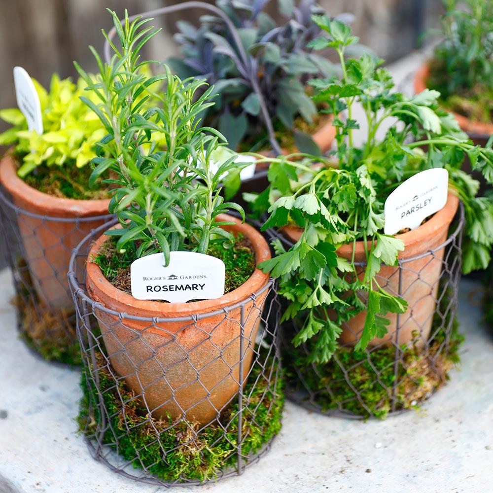 Herb Plantings