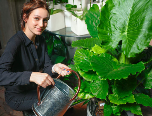 How to Fertilize Your Indoor Plants