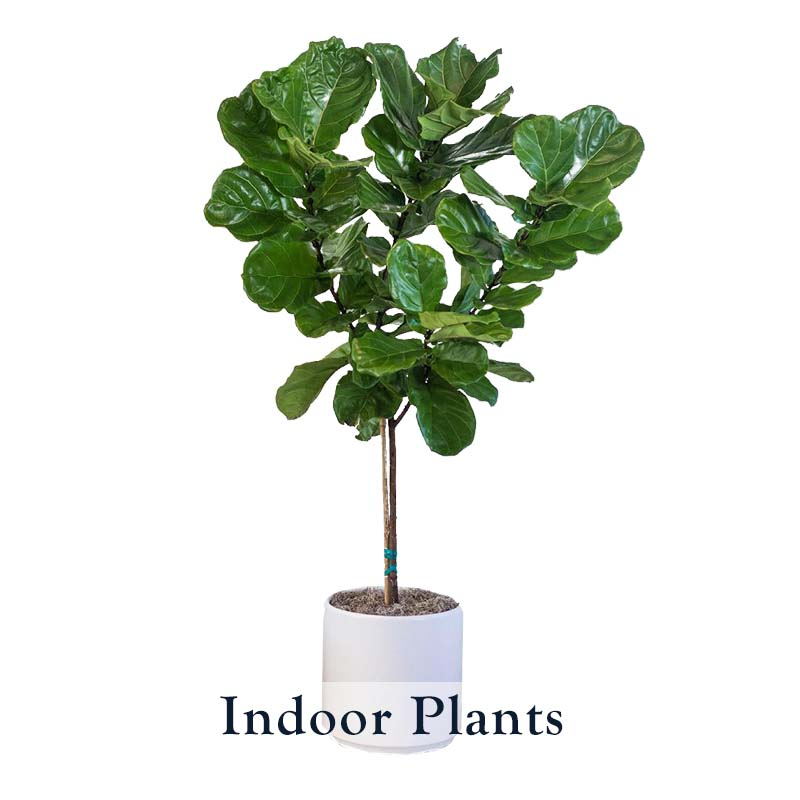 Indoor_Plants_WP