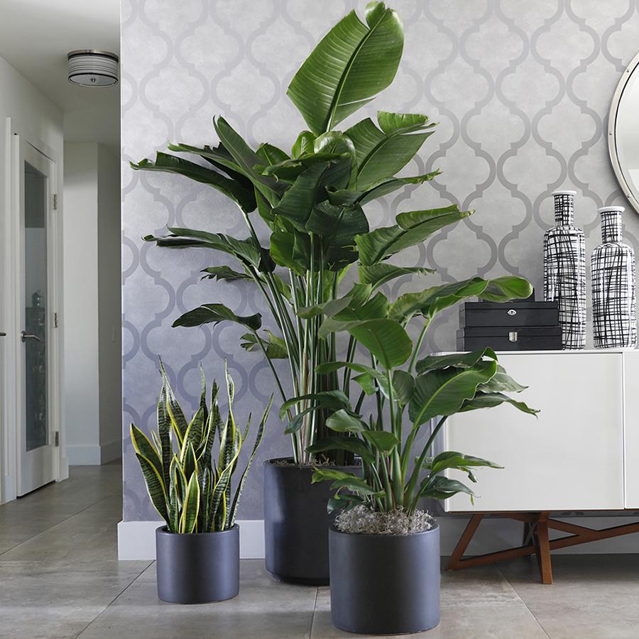 General Success with Indoor Plants