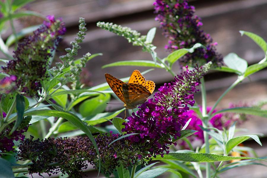 Best Bird & Butterfly Plants