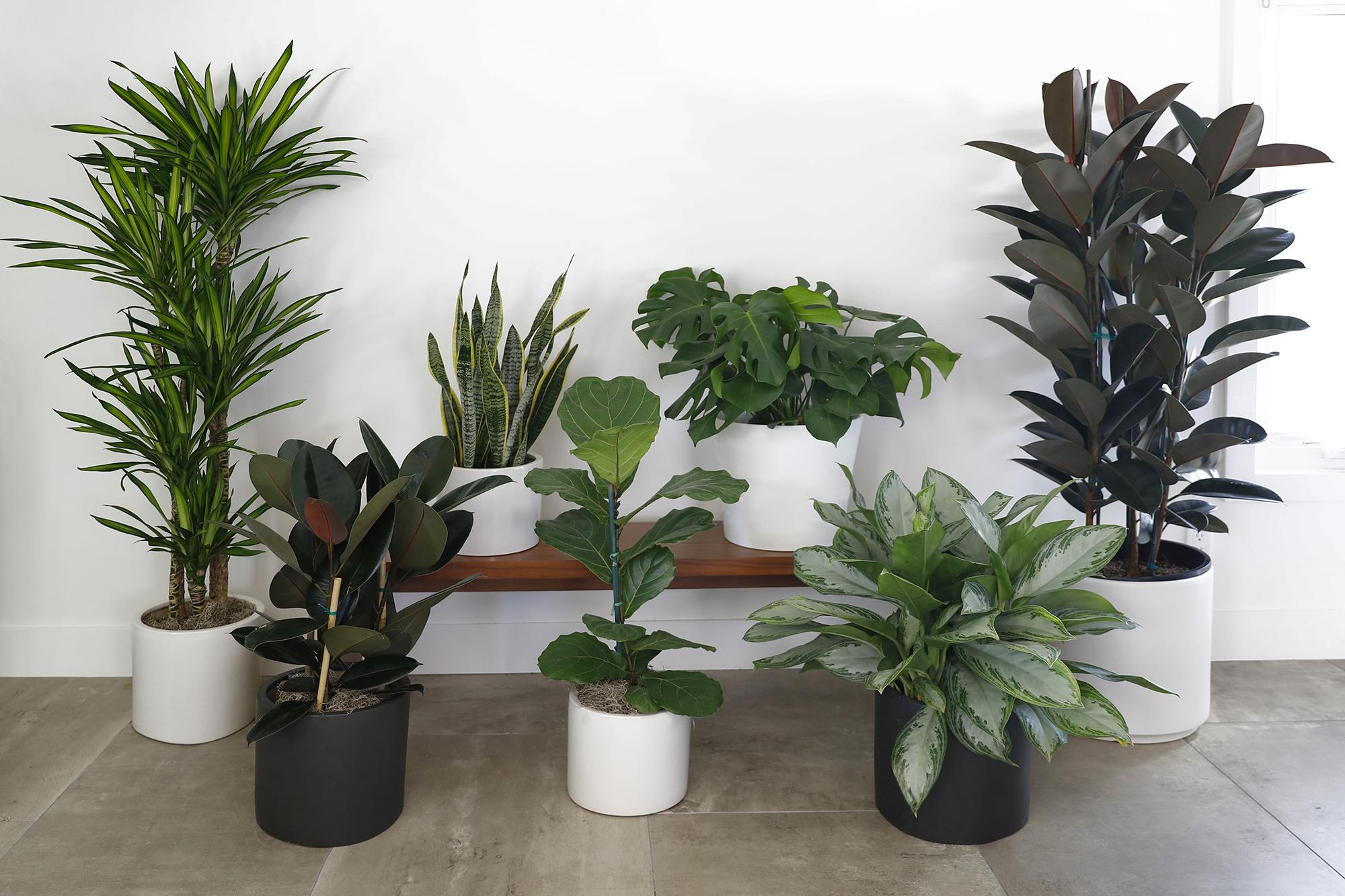 New & Cool Indoor Plants
